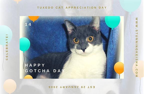 Tuxedo Cat Appreciation Day Commentathon