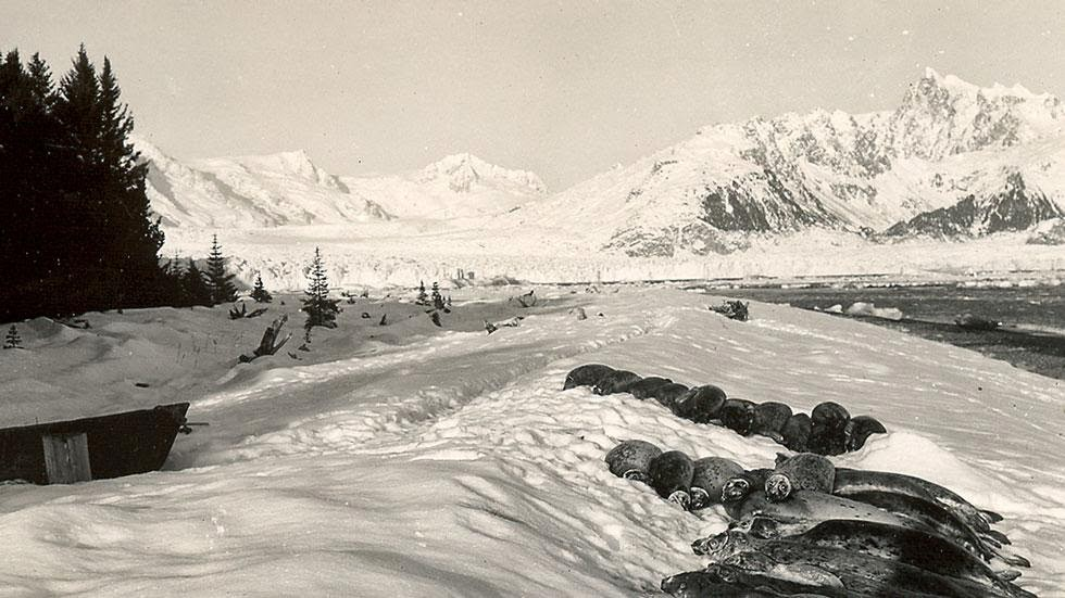 Northwestern Glacier (1920s - 1940s) - Photos of Alaska Then And Now. This is A Get Ready to Be Shocked When You See What it Looks Like Now.