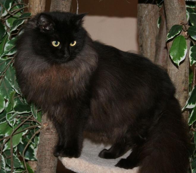 Black Cats Intelligence