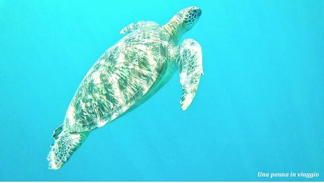 snorkeling tartarughe gili air