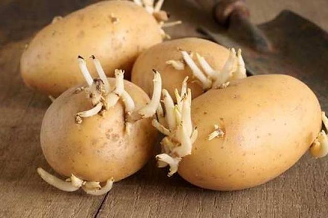 لهذا السبب... إياك أن ترمي البطاطا عند ظهور براعم عليها! تعرفوا إلى السبب وراء ذلك