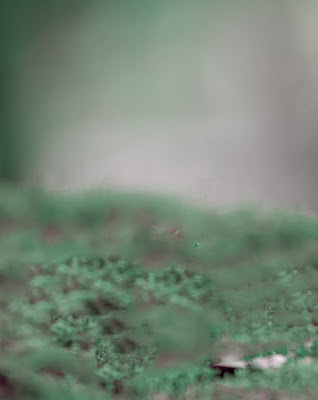 New Full Blur Green Effect Background Free Stock