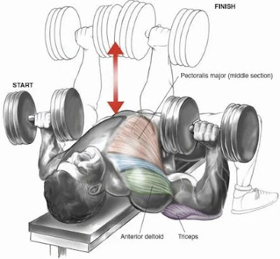 Flat Dumbbell Fly and Flat Dumbbell Press