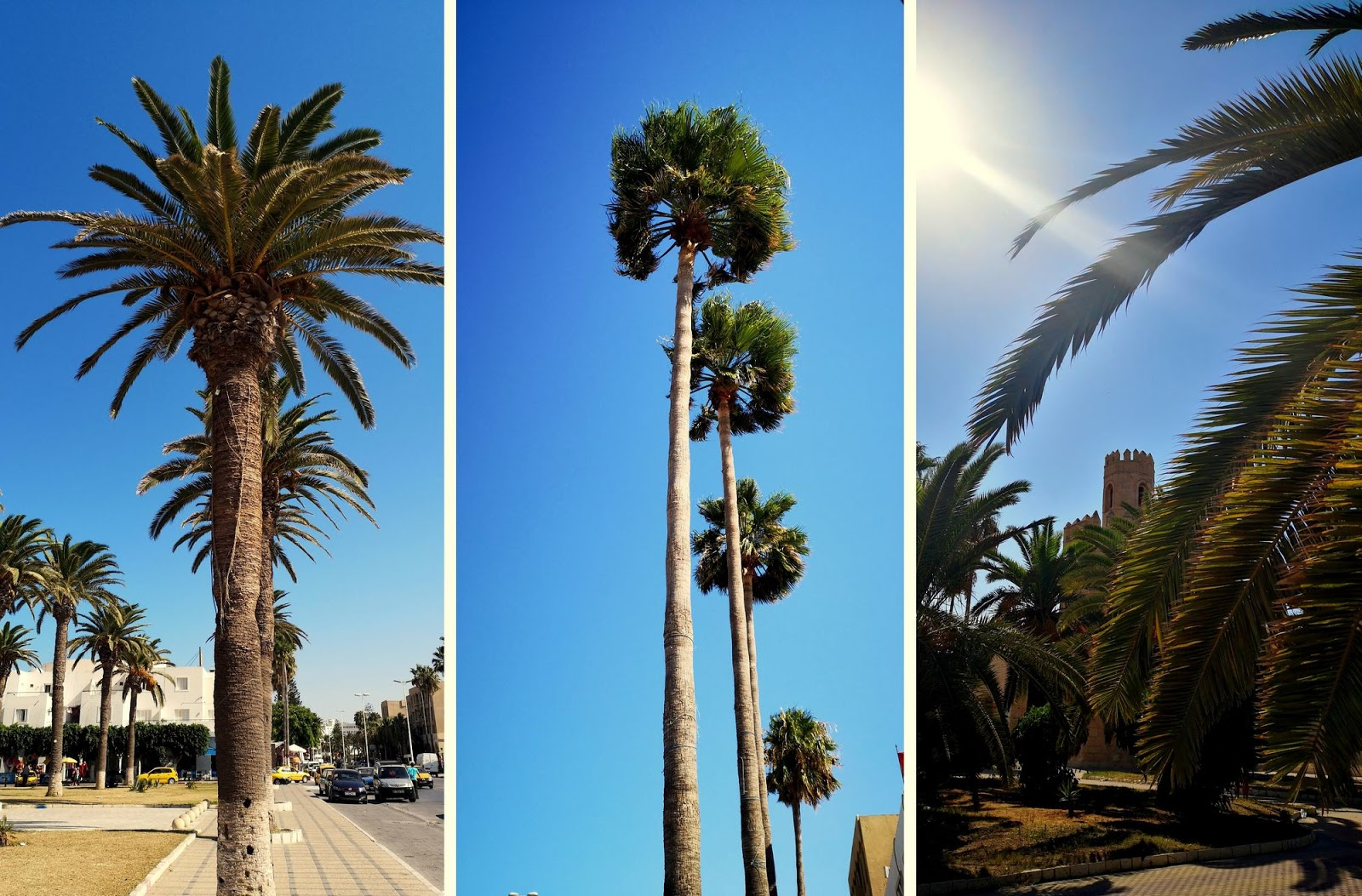 Zwiedzamy Monastyr, Kartagine, Sidi Bou Said w dwa dni.