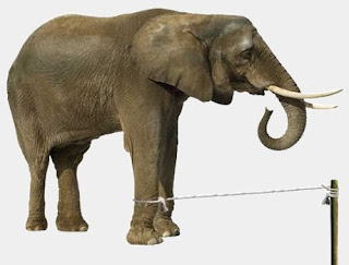 La corda che tiene gli elefanti