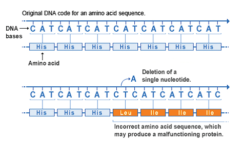 A deletion changes the number of DNA bases by removing a piece of DNA