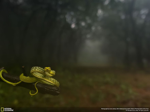 National Geographic - Varun Aditya - Hindistan