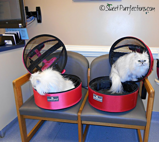 two silver Persian cats in Sleepypod carriers at vet