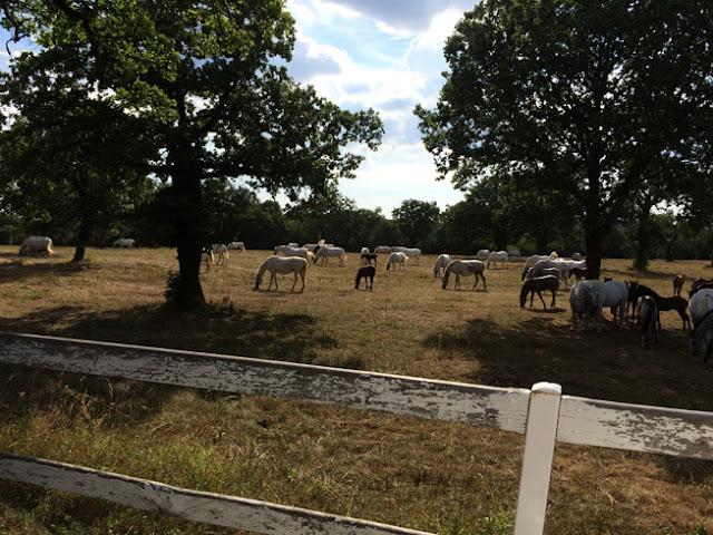 Lípica, la cuna de los caballos eslovenos. www.caravaneros.com