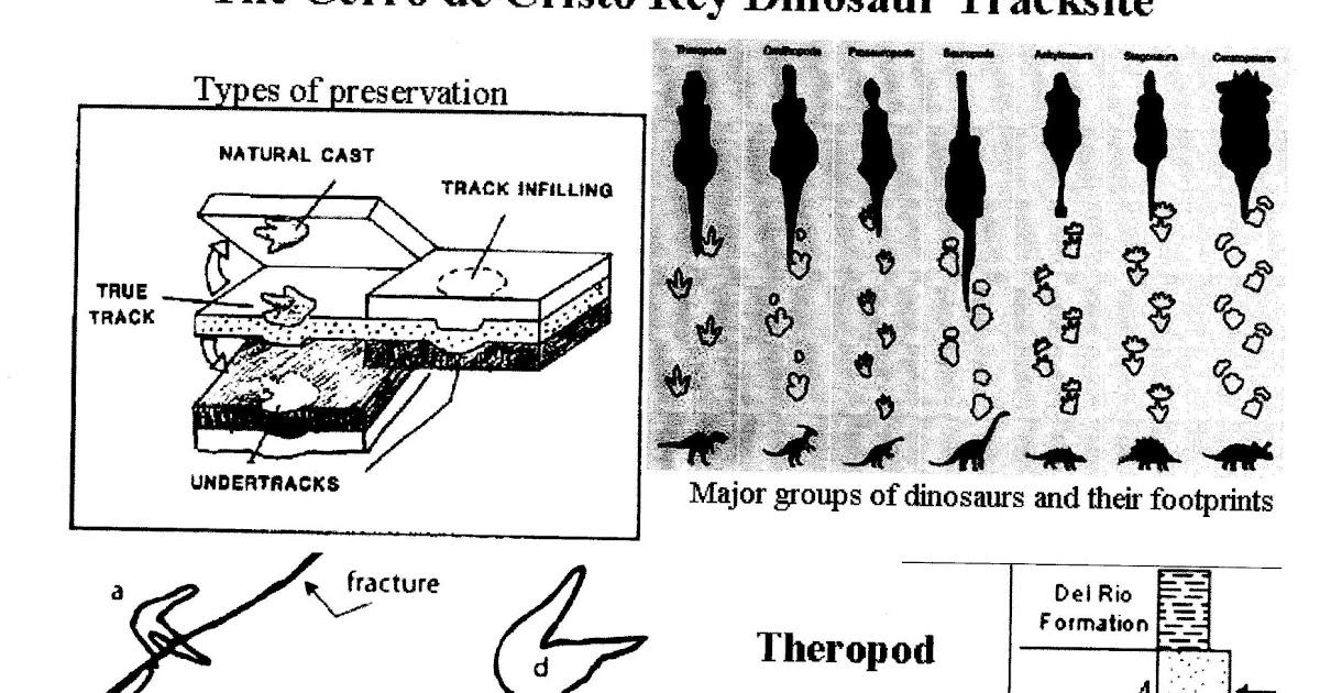 Some Fossils: Dinosaur Footprints