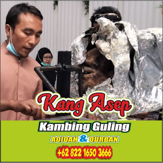 Jual Kambing Guling di Pasteur Bandung, jual kambing guling di pasteur, jual kambing guling di bandung, kambing guling di pasteur, kambing guling,