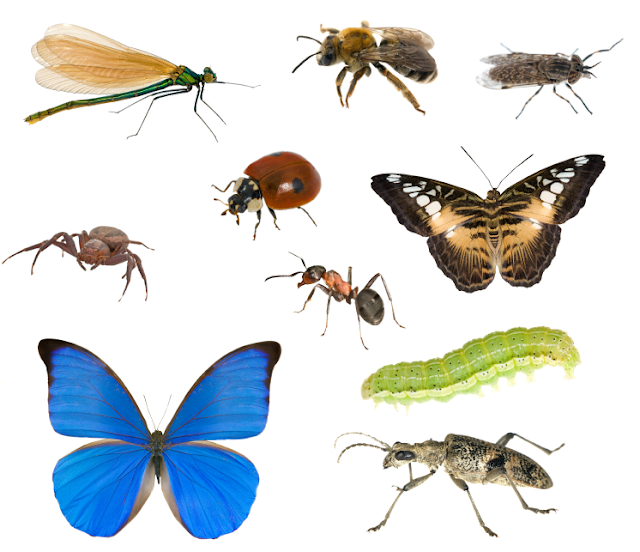 insects estimated to quintillions, amounting in the number of individual insects alive to day.