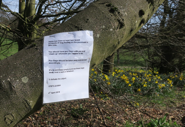 Notice about dog fouling pinned to branch of tree. (Plus daffodils.)