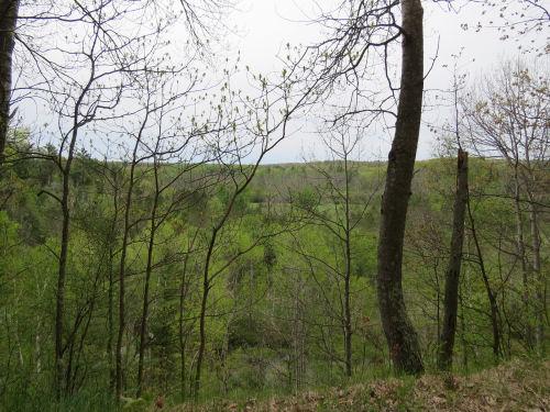 spring trees on hillside above Manistee River