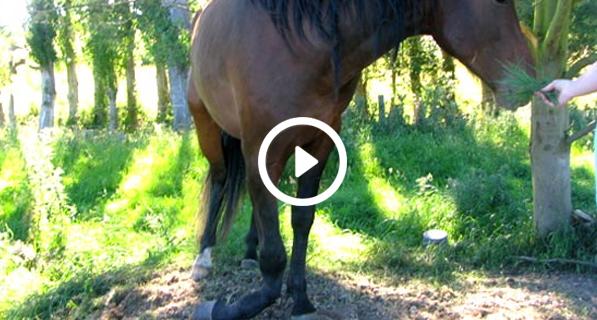 هل تعلم لماذا يجب قتل الحصان اذا إنكسرت ساقه ؟؟ تخيل السبب ....!!