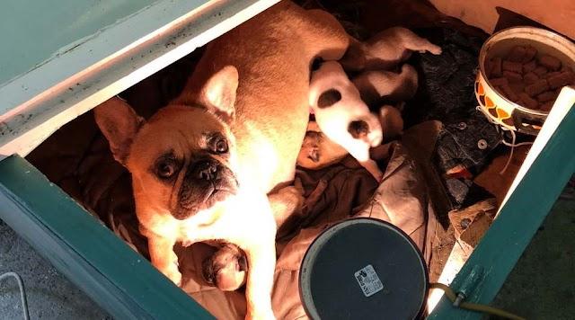 Kölykeivel együtt lopta el a kutyát egy férfi Karcagon