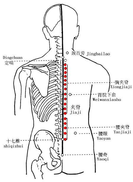 腰眼穴位 | 腰眼穴痛位置 - 穴道按摩經絡圖解 | Source:zhongyibaike.com