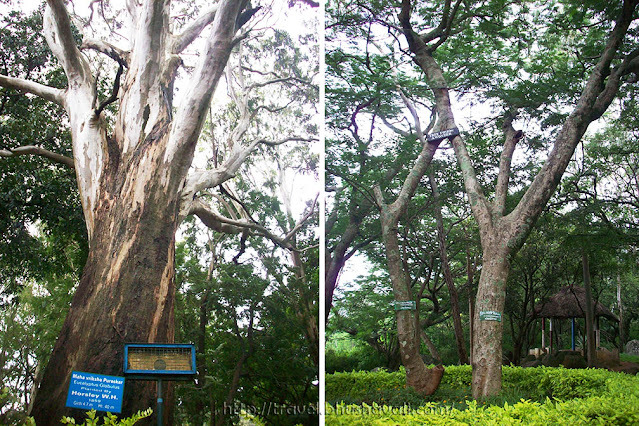 Trees of Horsley Hills