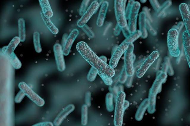 Zdravlje crijeva: Bakterije, bolesti i održavanje