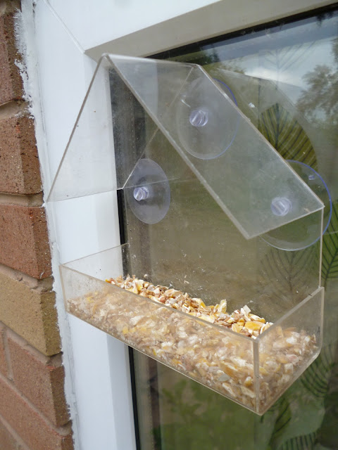 Window bird feeder perspex