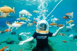 17 Arti Mimpi Melihat Ikan Berenang Menurut Primbon Jawa Terlengkap
