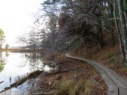 Island Trail Ludington State Park
