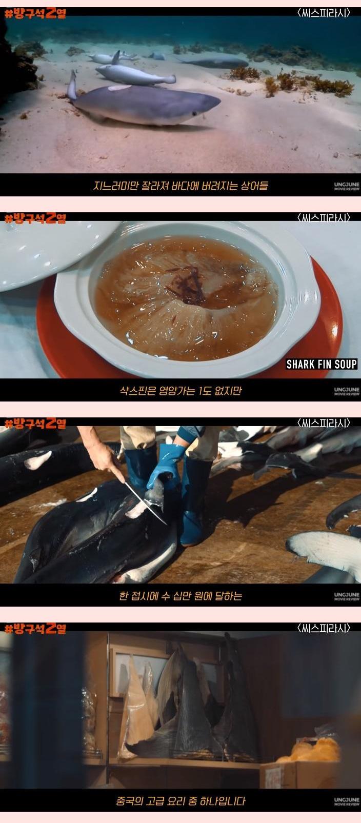 일본 돌고래 학살의 배후 기업 - 꾸르