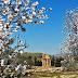 На Сицилии проходит фестиваль цветущего миндаля
