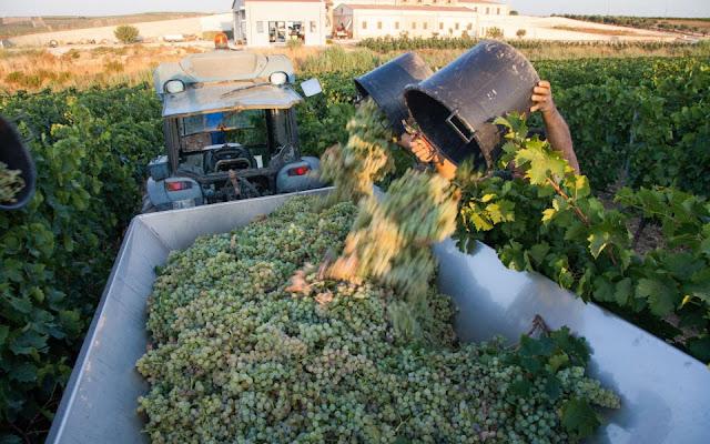 Assuli Baglio winery Sicily