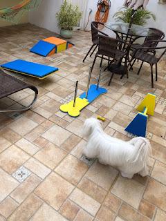 aparelho de fisioterapia para cães