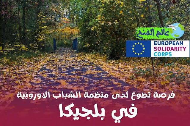 منحة تطوع في بلجيكا مع منظمة الشباب الاوروبية ممولة بالكامل