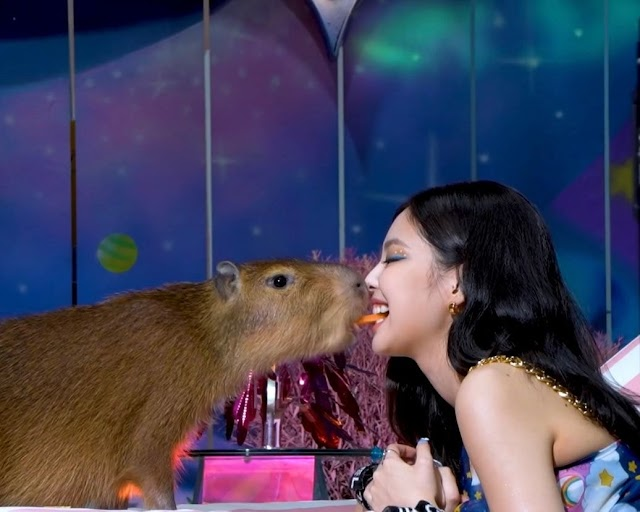 Knetz surprised to know that the Capybara who with BLACKPINK Jennie in 'Ice Cream' MV is real.