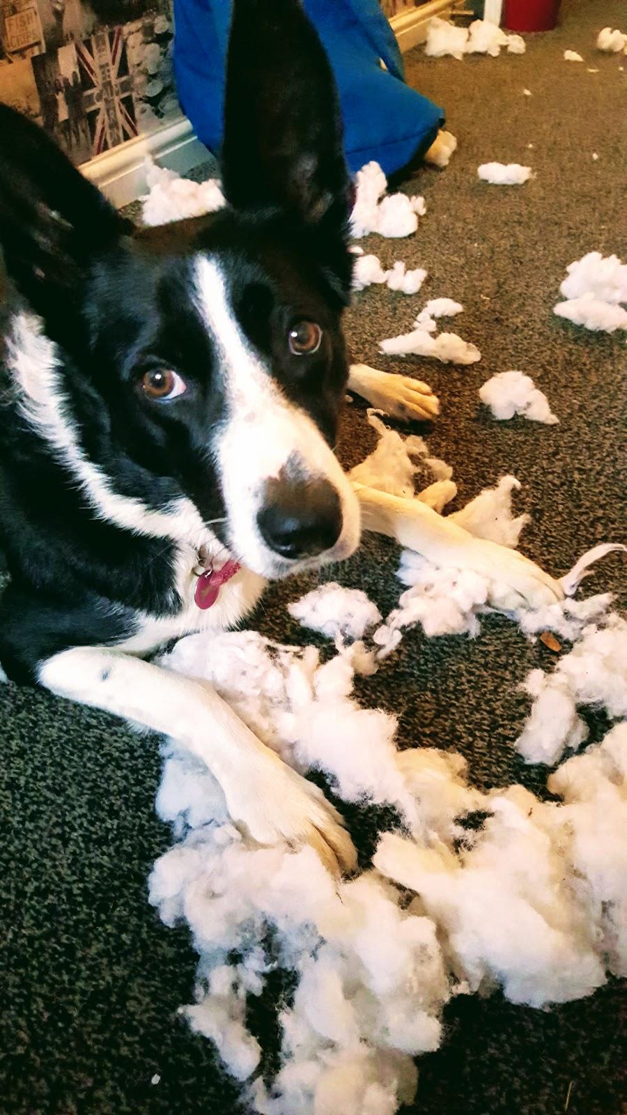 It Wasn't Me!?