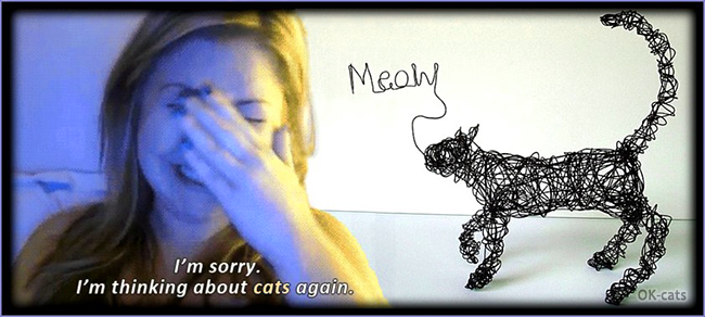 "Photoshopped Cat picture • Cat MEME • ""I'm sorry..I'm thinking about cats again"". Hahaha, it works with any kind of cat :)"