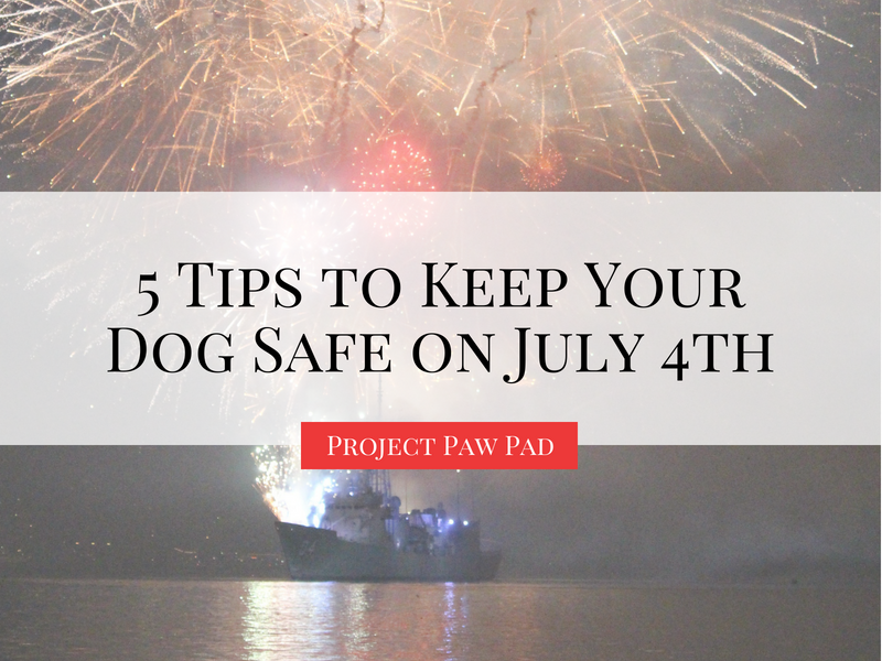 tips to keep your dog safe on july 4th, independence day, america, united states, July 4th party | Project Paw Pad