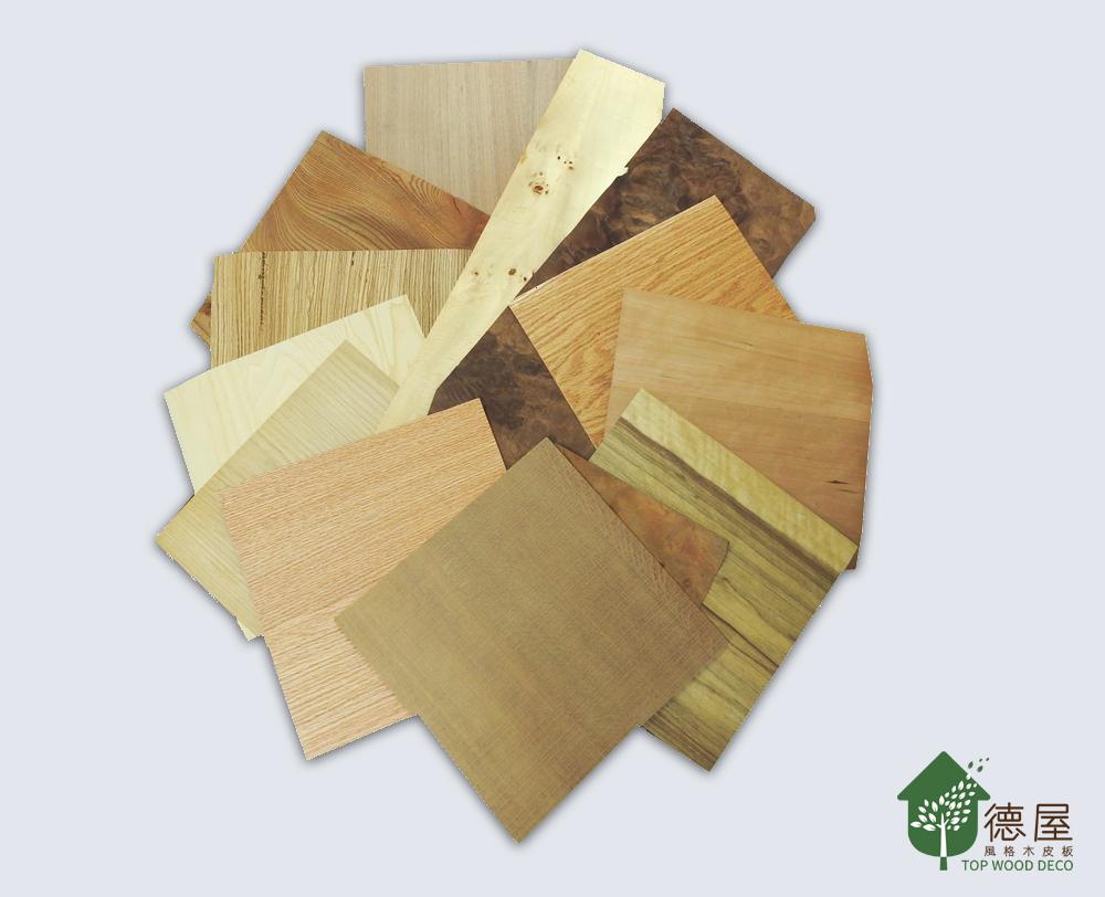木頭人小學堂|什麼是木皮