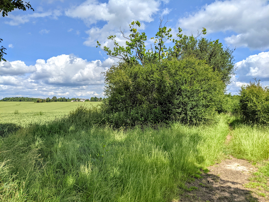 The path goes to the left of the hedgerow, not to the right - point 5