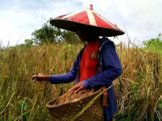 Nama - Nama Musim Yang Berkaitan Dengan Tanaman di Perkebunan - Bahasa Sunda