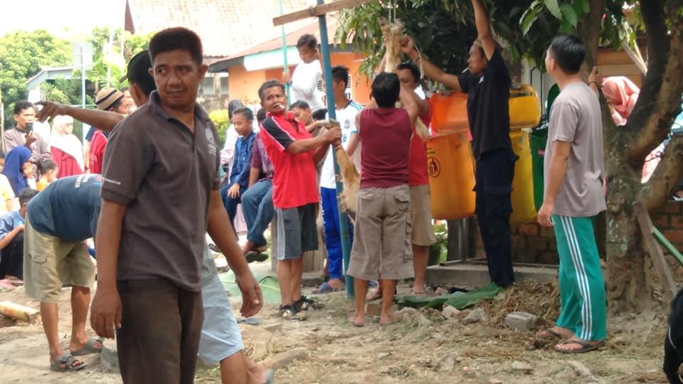 Photo proses Pengulitan Kambing Hewan Qurban di di Tanjung Sari Jambi