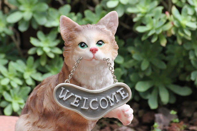 Welcome a cat