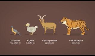 Hewan Yang Telah Punah Sejak Kedatangan Manusia Di Bumi, daftar hewan dan nama hewan yang sudah punah akibat ulah manusia