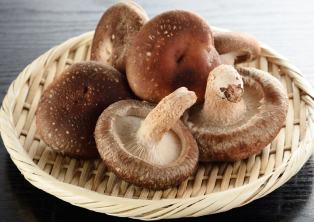 10 Jenis Jamur yang Bisa Dimakan dan Bermanfaat untuk Kesehatan Tubuh