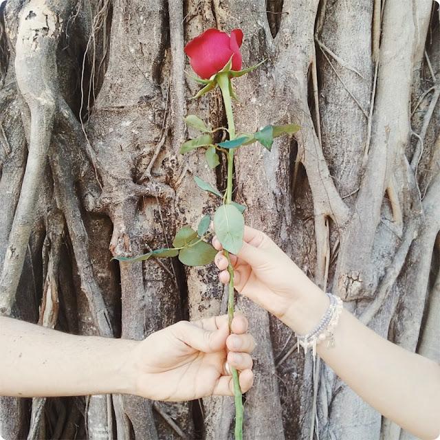 rosa vermelha casal