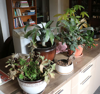 Cold plants brought down to the warm