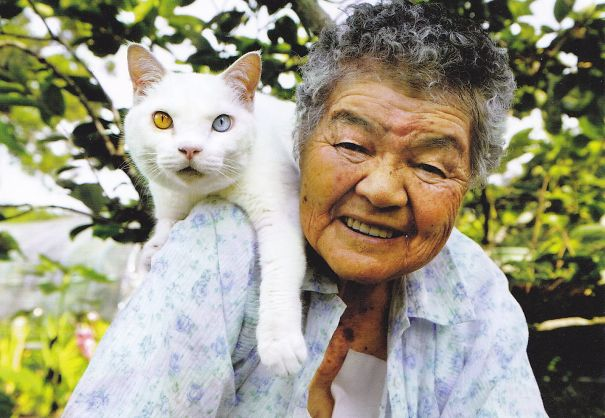 Fukumaru, The Friendliest Cat With Heterochromia-2