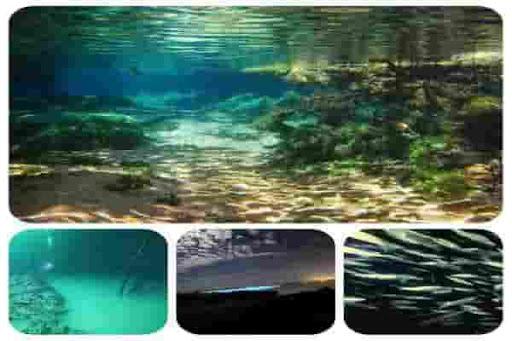небольшой обзор интересных явлений Мирового океана