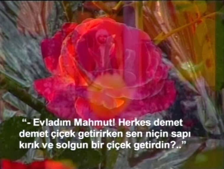 Aziz Mahmut Hüdai'nin Çiçek Sevgisi
