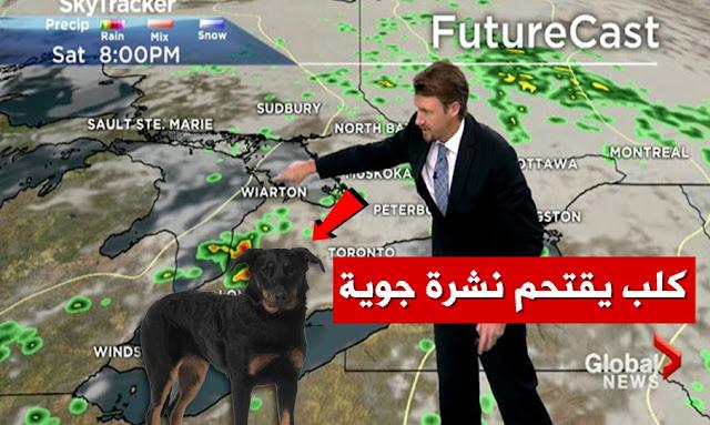 كلب يقتحم نشرة جوية -  dog interrupts live TV