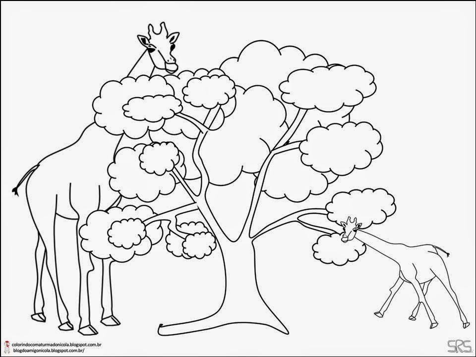 Girafa - Desenhos Para Colorir - Colorir