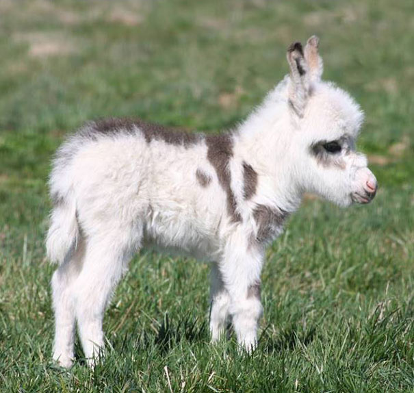 Baby Animals: Baby Donkey